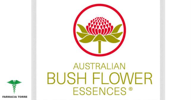 Bush Australian Flower